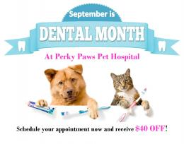 Perky Paws Pet Hospital Promotions