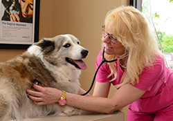 Veterinary Preventative Wellness Care